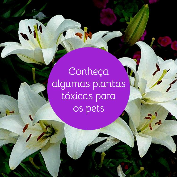 Conhe A 6 Plantas Nocivas Para Cachorro E Gato Blog Vegpet